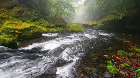 river Kamenice in autumn, Bohemian Switzerland Footage