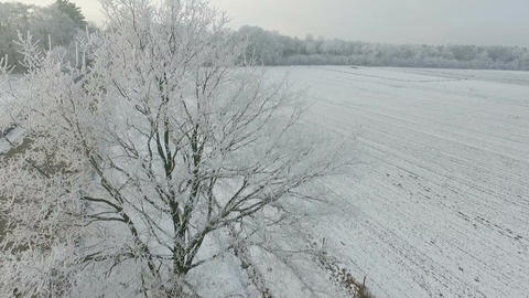 Aerial shots of Dutch winter landscape, fields