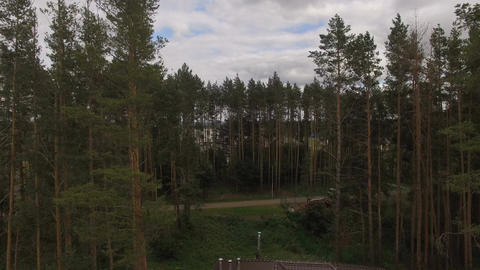 Panoramic View from Pine Forest to Meadow Valley behind Footage