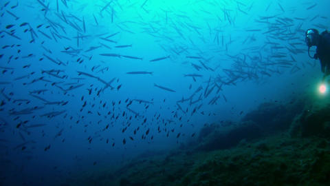 Barracudas and diver in a dark blue sea - Underwater shot Footage