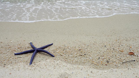 Blue starfish lying on a sandy beach in waves, 4k Live Action