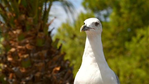 Funny White Seagull Bird Portrait Footage