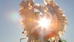 samba dancer carnaval Brazilian parade float car dancing dance carnival Brazil Filmmaterial