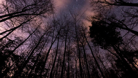 Time lapse of stars moving behind a row of bare trees Footage