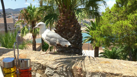 White Seagull Bird Waiting To Feed Next To Outdoor Restaurant Table Footage