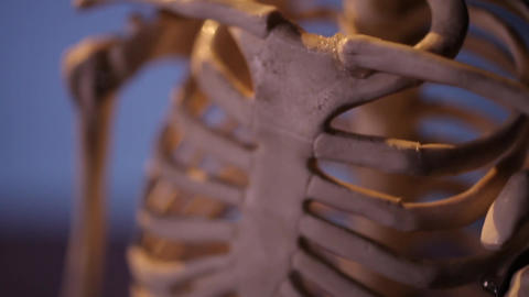 Human skeleton. Thorax and skull Footage
