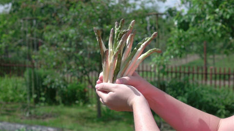 Two videos of hands holding asparagus in real slow motion Footage