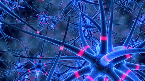Flight through the nerve cells Animation