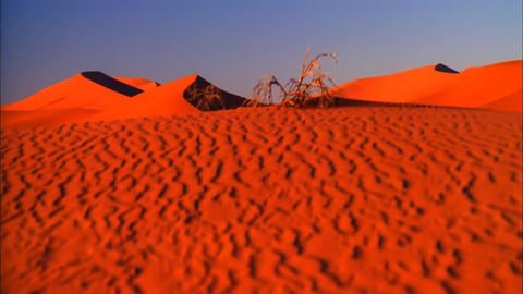 View of the Red Sands of Namibia. in the Wilderness of Towering Red Dunes. Hot L Footage