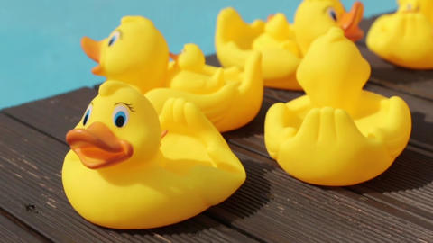 Yellow Rubber Ducks By The Pool push in and pan shot Footage