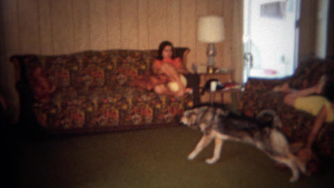 1966: Lazy sunday afternoon lounging on big colorful couches dog stretching. DES Footage