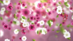 Falling Flowers (4) CG動画素材