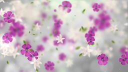 Falling Flowers (2) Animation