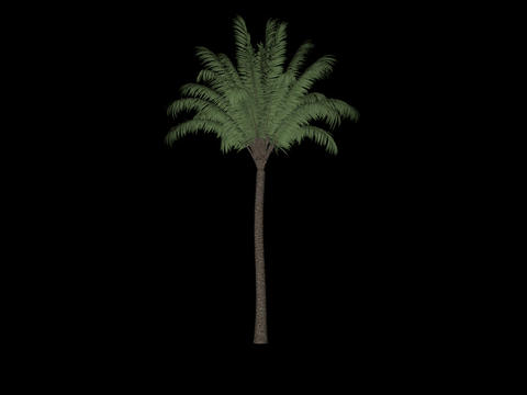 Palm animation loopable with alpha chanel - 1 Animation