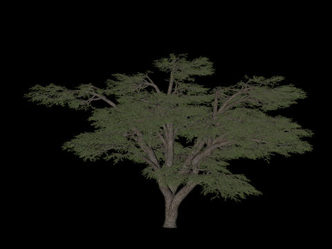Tree animation loopable with alpha chanel - 11 Stock Video Footage
