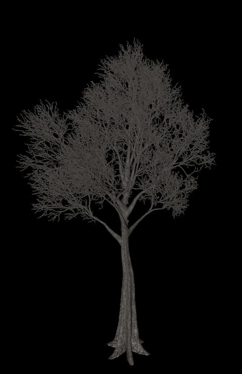 Black tree animation loopable with alpha chanel - 2 Animation
