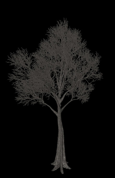 Black tree animation loopable with alpha chanel - 2 Stock Video Footage