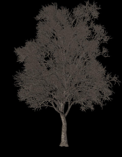 Black tree animation loopable with alpha chanel - 4 Animation