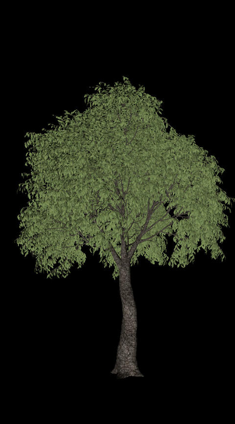 Tree animation loopable with alpha chanel - 1 Animation