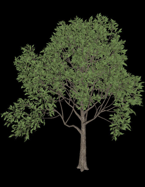 Tree animation loopable with alpha chanel - 6 Animation