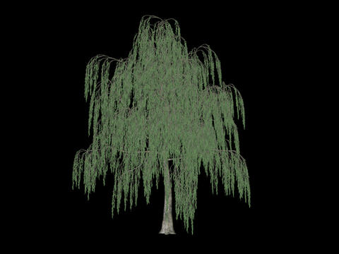 Tree animation loopable with alpha chanel - 9 Animation