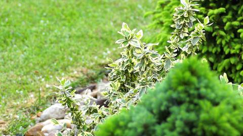 rain on lush green shrubs Live Action