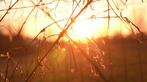 Beautiful nature scene with blooming flowers in sun flare. Slow Motion Footage