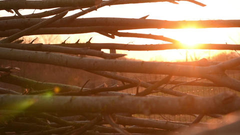 Rise Up View at Stacked Logs in Sun Flare Footage