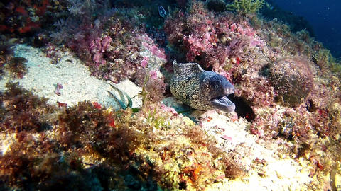 Scuba Diving Mallorca - Moray eel Live Action