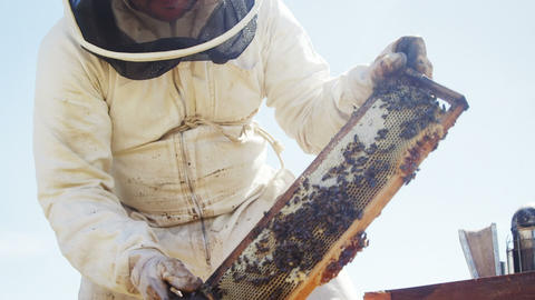 Beekeeper inserting a honey frame in beehive Live Action