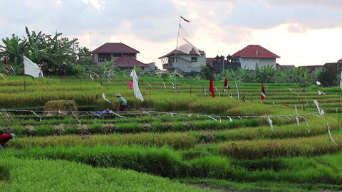 Workers on a rice field Filmmaterial
