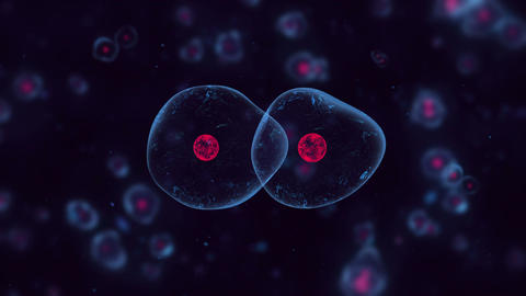 Division of cells Animation