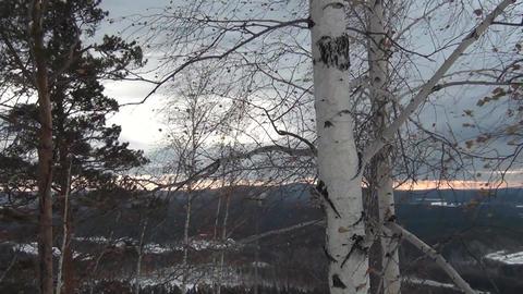 Birch trees in storm Filmmaterial