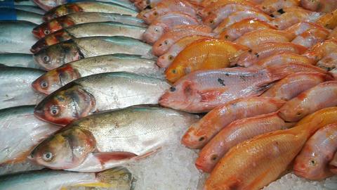 Variety of fresh frozen fish Filmmaterial