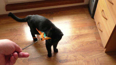 Black cat playing with a toy Stock Video Footage