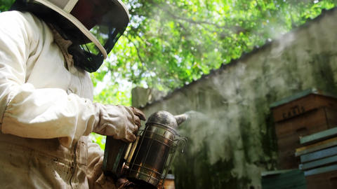 Beekeeper smoking the beehive using a hive smoker Live Action