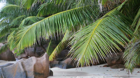 Palm Leafs at Beach Footage