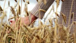 hand on wheat Footage