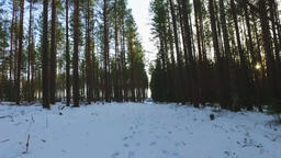 Steadicam shot. POV. Nature landscape. Winter forest landscape Footage