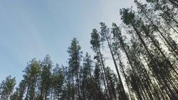 Steadicam shot. POV. Nature landscape. Winter forest landscape Footage