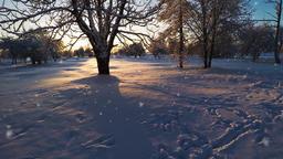 Snowfall. Sunset. Winter landscape Filmmaterial