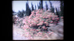 1972 - Greece Mycenae bus ride leandrii blossom lions gate and tourists near wal Footage