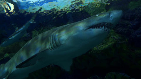 Four videos of sharks in 4K Footage