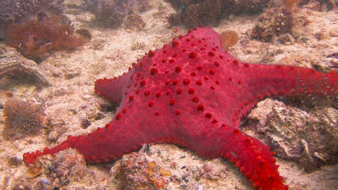 Starfish Live Action