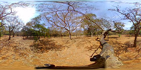 Tree View over Park India 360 Video - 1 Archivo