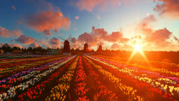 Traditional Dutch windmills with vibrant tulips in the foreground over sunset, t Animation