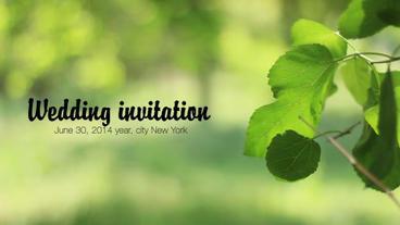 Wedding Invitation 애프터 이펙트 템플릿