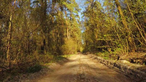 Slow Ride on Spring Forest Road Footage
