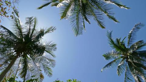 sun shining through coconut palm leaves, 4k Footage