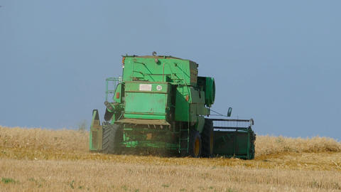 Combine harvester on ripe wheat field Footage